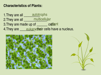 Plant Structures PowerPoint and Guided Notes