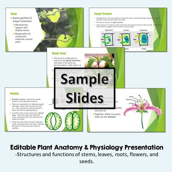 Plant Anatomy & Structures: Powerpoint & Interactive Notebook