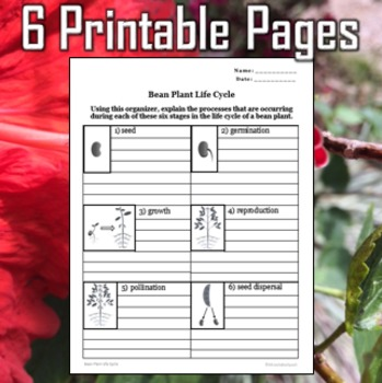 Plant Structures Printables