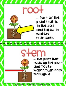 Plant Structures: Using Content Vocabulary