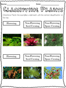 Plant Structures and Classification