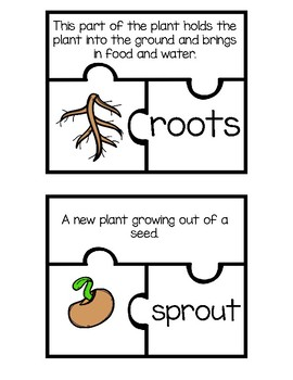 Plant Structures and Functions