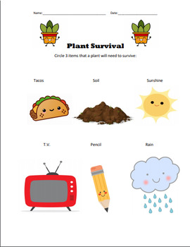 Plant Survival Worksheet - plants need water, sunlight, and soil to grow