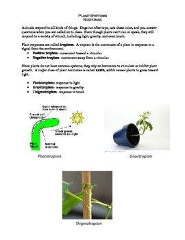 Plant Systems Review
