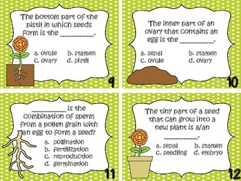 Plant Terms Task Cards