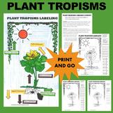 Plant Tropisms Labeling Activity - Phototropism, Gravitrop
