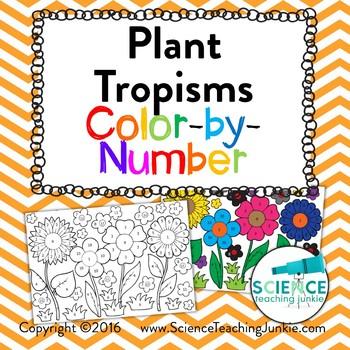 Plant Tropisms: Phototropism, Geotropism, & Thigmotropism