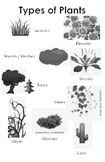 Plant Groupings Anchor Chart