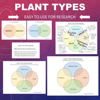 Plant Types Chart- Nonvascular, Seedless, Gymnosperm, Angiosperm