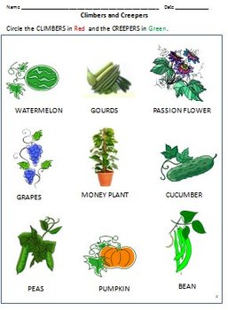 plant worksheets for 3rd grade