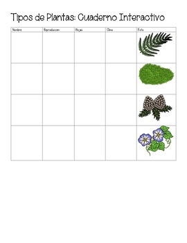 Plant Types Interactive Notebook (Moss Ferns Flowers Conifers) (English Spanish)
