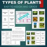 Plant Types (Vascular, Seed, Gymnosperm, Angiosperm) Sort and Match Activity