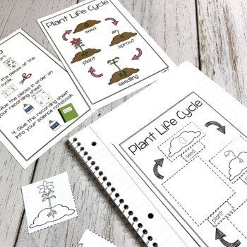 Plant Unit | Science Centers for Primary Grades