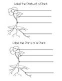 Plant Unit Investigation Book