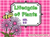 Lifecycle of Plants
