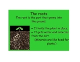 Plant Unit & Review Activities