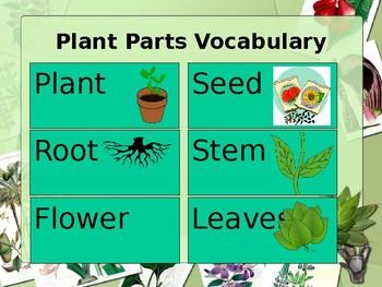 Plant Unit Sample
