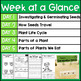 Plant Unit for Kindergarten and First Grade