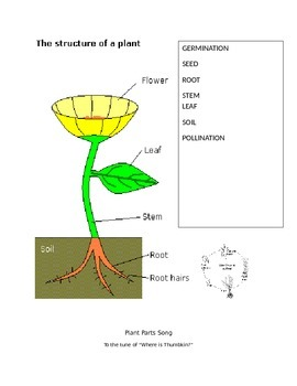 Plant Unit for Second Grade Correlated to NGSS and WIDA