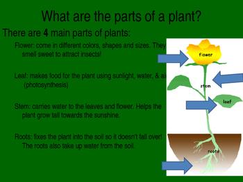 Plant Unit power point