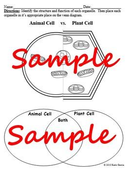 Plant VS Animal Cell Worksheet - EDITABLE