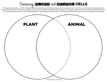 Plant VS Animal Cells Venn Diagram Card Sort for Middle and High School Students