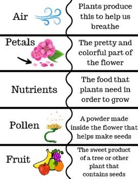 Plant Vocabulary Cards