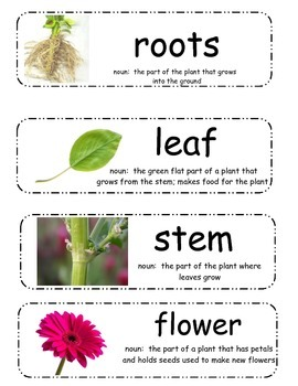 Plant Vocabulary Cards (Jack and the Beanstalk)
