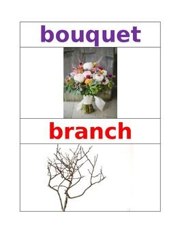 Plant Vocabulary Words Pre K NYCDOE