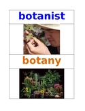 Plant Vocabulary Words Pre K NYCDOE