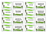 Plant Vocabulary Review Flash Cards