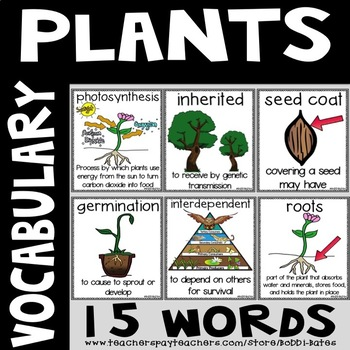 Plant Vocabulary Word Posters