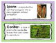 Plant Word Wall Cards