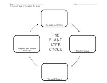 Plant Worksheet Bundle