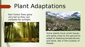 Plant and Animal Adaptations