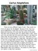 Plant and Animal  Adaptations BUNDLE!