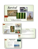 Plant and Animal Adaptations for Survival PowerPoint