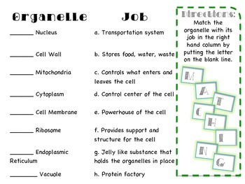 Plant and Animal Cell Activities Packet