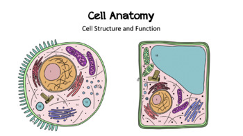 Plant and Animal Cell Anatomy