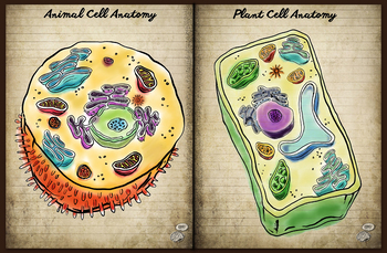 Plant and Animal Cell Anatomy Comparison- colorful visual aid