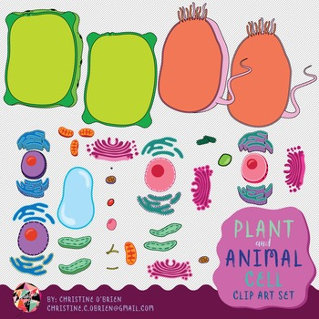 Plant and Animal Cell Clip Art