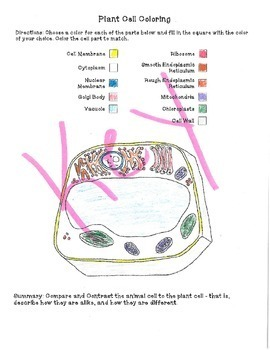 Plant and animal cell coloring activity by sandy 39 s science for Animal cell coloring page answers