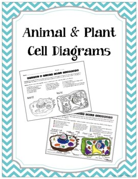 Plant and Animal Cell Coloring Page