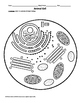Plant and Animal Cell Labeling Diagrams