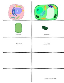 Plant and Animal Cell Matching activity by Lauren Allen   TpT