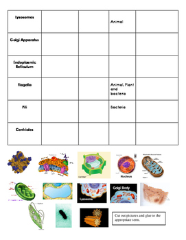 Plant and Animal Cell Organelle Activity