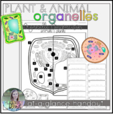 Plant and Animal Cell Organelle Comparison with Chart