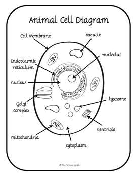 Plant and Animal Cell Organelles Structure and Function