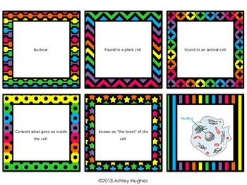 Plant and Animal Cell Review Task Cards