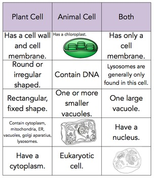 Plant and Animal Cell Sort